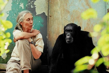 Instituto Jane Goodall 2013